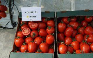 Томат колибри: характеристика и описание сорта, урожайность, отзывы – все о помидорках
