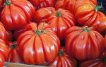 """Томат """"американский ребристый"""": отзывы, характеристика и описание сорта – все о помидорках"""