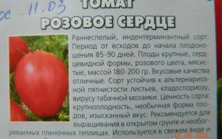 """Томат """"розовое сердце"""": отзывы, фото, описание сорта, урожайность – все о помидорках"""