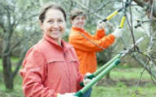 О выкорчевывании яблонь: как быстро и вручную избавиться от пеньков на даче