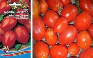 Томат засолочный грунтовый: седек, характеристика и описание сорта, урожайность, отзывы – все о помидорках