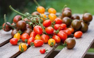 Как сохранить плоды помидоров свежими в домашних условиях как можно дольше – все о помидорках