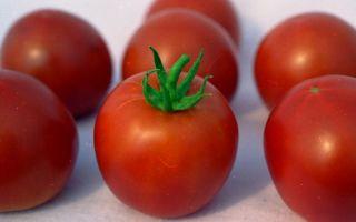 """Помидоры """"белый налив"""": отзывы, фото, описание, урожайность – все о помидорках"""
