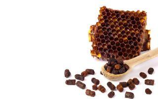 О меде с пергой и черникой, как приготовить перговый мед, полезные свойства