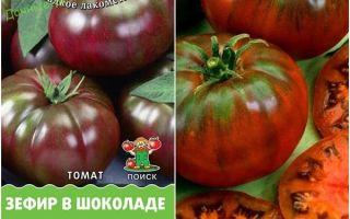 Томат зефир в шоколаде: характеристика и описание, отзывы, фото, урожайность сорта – все о помидорках