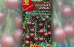 Томат вишенка черная: описание сорта, характеристика, отзывы об урожайности, фото – все о помидорках