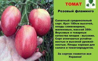 Томат золотая лесная яблоня: характеристика и описание сорта, урожайность, фото, отзывы – все о помидорках