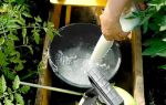 Молоко, йод и вода для помидор: обработка для завязей – все о помидорках