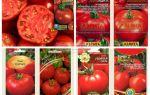 Томат абрикос: сады россии для открытого грунта, характеристика и описание сорта – все о помидорках