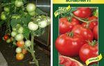Томат волверин: характеристика и описание сорта, урожайность, фото, отзывы – все о помидорках