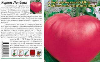 Томат розовый король: характеристика и описание сорта, урожайность, отзывы – все о помидорках