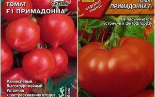 Томат примадонна: характеристика и описание сорта, отзывы, урожайность – все о помидорках
