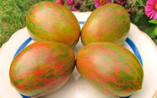 Томат козула 132: особенности сорта, описание, урожайность, отзывы – все о помидорках