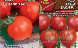 Томат «раджа»: характеристика и описание сорта, отзывы, фото, урожайность – все о помидорках