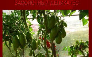 Томат засолочный деликатес: характеристики и описание сорта, урожайность, отзывы, фото – все о помидорках