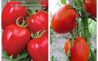 Сорта томатов с фото и описанием – все о помидорках