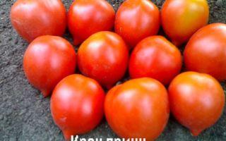 Томат крон принц: характеристика и описание сорта, отзывы, урожаность, фото – все о помидорках