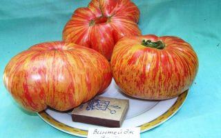 Томат винтейдж вайн: характеристика и описание, отзывы, фото, урожайность сорта – все о помидорках