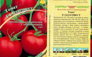 Томат джейн: характеристика и описание сорта, особенности выращивания – все о помидорках