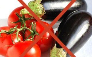 Баклажаны – все о помидорках