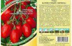 Томат комнатный сюрприз: характеристика и описание сорта, особенности выращивания – все о помидорках