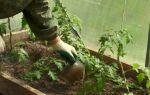 Подкормка помидор золой в теплице из поликарбоната и открытом грунте – все о помидорках
