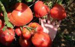 """Томат """"чудо земли"""": описание сорта, фото, отзывы, урожайность – все о помидорках"""
