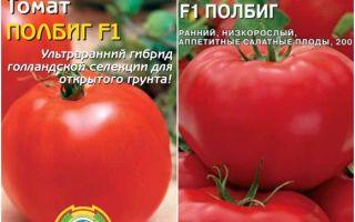 Томат полбиг: характеристика и описание сорта, отзывы, фото – все о помидорках