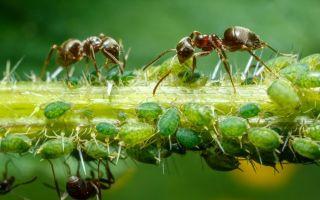 О болезнях огурцов в теплице: почему гибнет рассада, чем обрабатывать