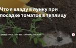 Что класть в лунку при посадке помидор в теплице – все о помидорках