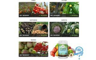 Biogrow, биоактиватор роста растений: инструкция, отзывы, где купить – все о помидорках