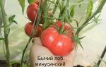 Фитофтора на помидорах, как бороться народными средствами – в теплице – все о помидорках