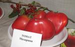 """Томат """"мазарини"""": характеристика и описание сорта, отзывы, фото, урожайность – все о помидорках"""