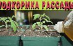 Чем подкормить рассаду помидор, чтобы были толстенькие стебли; народными средствами – все о помидорках
