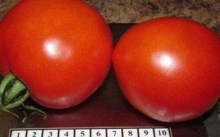 Томат адамово яблоко: характеристика и описание сорта, урожайность, фото, отзывы – все о помидорках