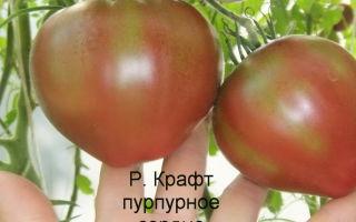 Томат зеленое сердце рейнхарда: характеристика и описание сорта, урожайность, фото, отзывы – все о помидорках