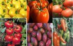 О помидорах – все о помидорках