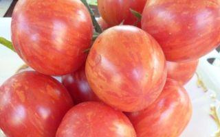Томат клубничный тигр: характеристика и описание сорта, отзывы тех, кто сажал – все о помидорках