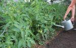 Подкормка помидор в теплице: какие удобрения и когда использовать, чтобы были толстенькие – все о помидорках