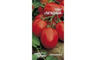 Томат лагидный: характеристика и описание сорта, урожайность, отзывы – все о помидорках