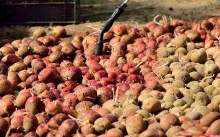 Командор для обработки картофеля перед посадкой: инструкция, применение