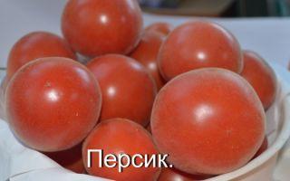 Томат персик: характеристика и описание сорта, особенности выращивания, красный, розовый – все о помидорках