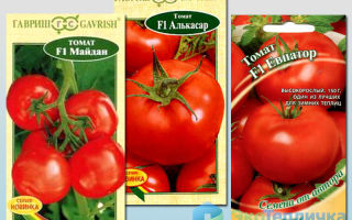 Томат океан: характеристика и описание сорта, урожайность, высокоурожайный, отзывы – все о помидорках