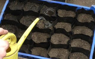 О выращивании огурцов в открытом грунте в подмосковье: сроки посадки в московской области