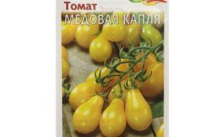 Томат медовая капля: характеристика и описание сорта – все о помидорках