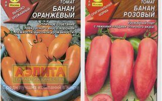 Томат оранжевый банан: описание сорта, характеристика, выращивание, отзывы, фото – все о помидорках
