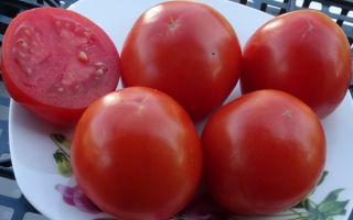 Томат розовый гигант мистера андервуда: описание сорта, характеристика, выращивание, отзывы, фото – все о помидорках