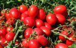 Лучшие сорта томатов на 2018 год для теплиц в подмосковье – все о помидорках