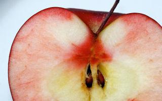 О выращивании груши из семечки на даче: секреты выращивания в домашних условиях