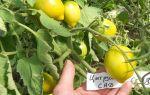 Цитрусовая кожура для выращивания томатов – все о помидорках